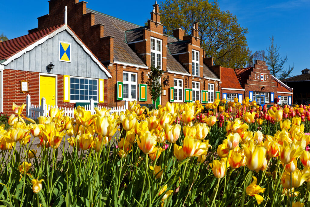 Tulips Line Paths At Windmill Island Village In Holland Michigan