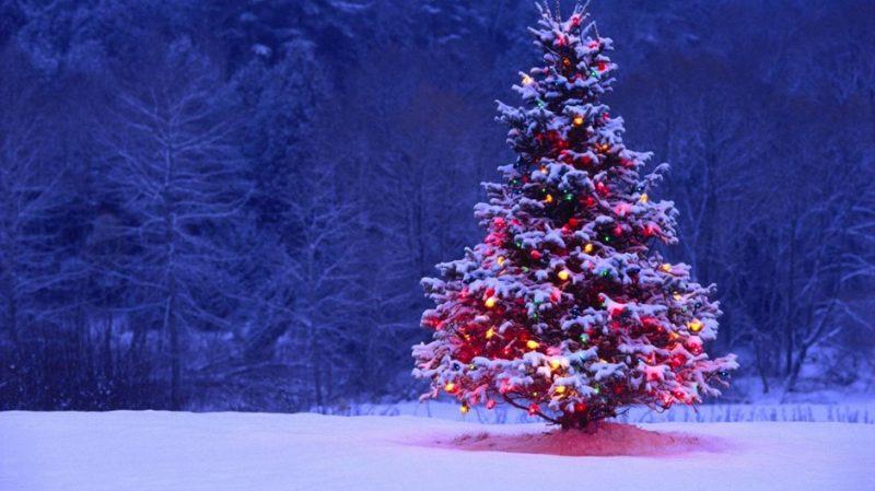 Holiday Lights Sights Amp Delights Custom Holidays