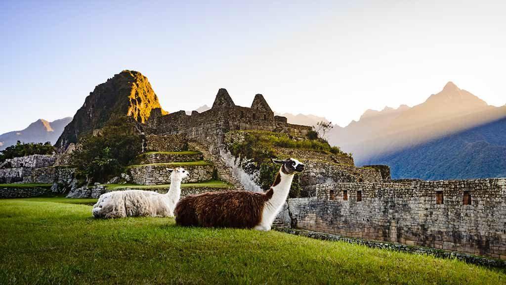two_llamas_at_sunrise_on_machu_picchu